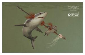 requin-1024x668